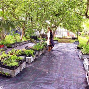 Verkoop van Eetbare Wilde Planten